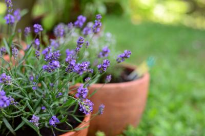 top-5-plantes-ete-chaleur.png