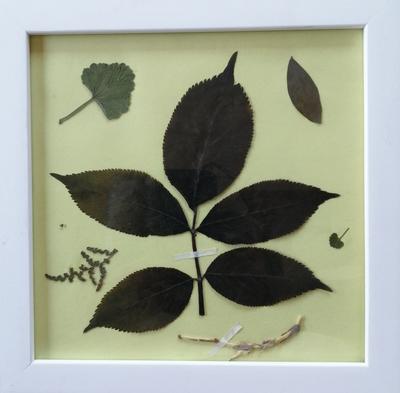 Cadre Herbier créatif médicinales7