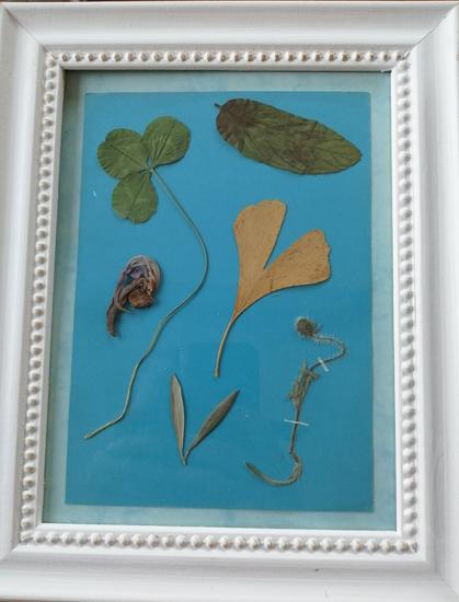 Cadre Herbier créatif médicinales12