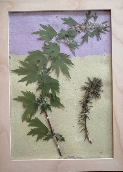Cadre Herbier créatif médicinales33