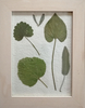 Cadre Herbier créatif médicinales29