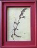 Cadre Herbier créatif médicinales14